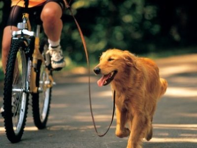 Собствениците на кучета да платят таксите