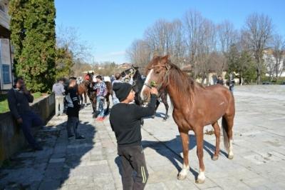 Над 20 коне се състезаваха в кушията в Баница